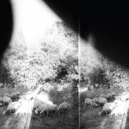 Godspeed You! Black Emperor - Asunder, Sweet And Other Distress  cst111